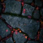 Flower Cobbles