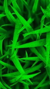 Newborn-Grass