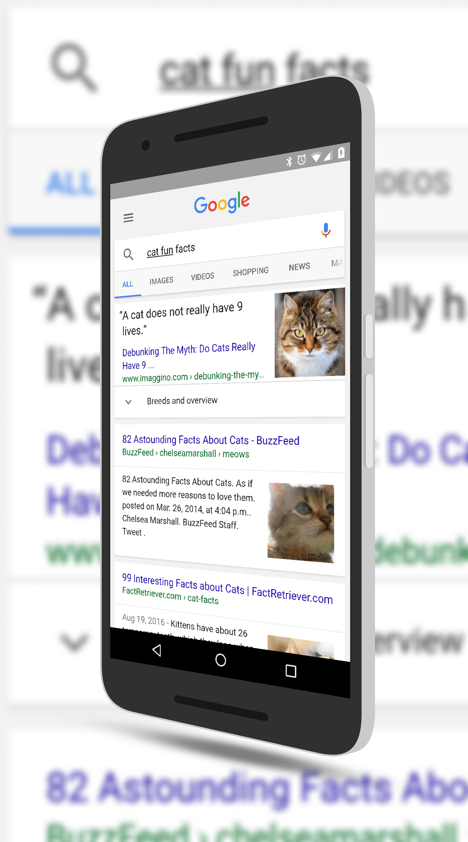 Cat Fun Facts in Google Search