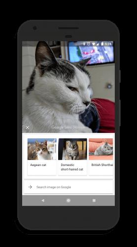 Cat Breeds Identified in Google Lens